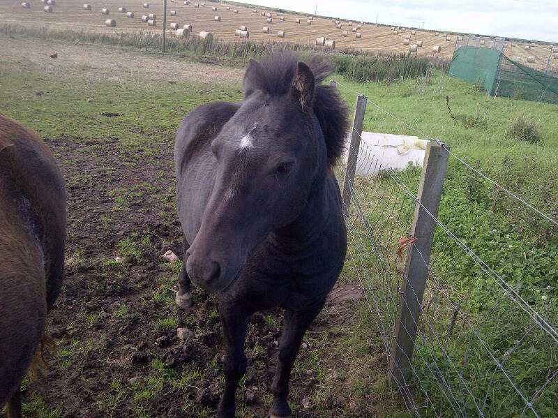 Horse for re-homing | The New Arc | North East Wildlife and Animal Rescue Centre